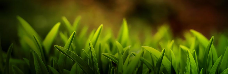 Background-slider-nature3